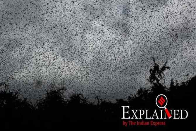locust attack in pakistan, Locust Emergency
