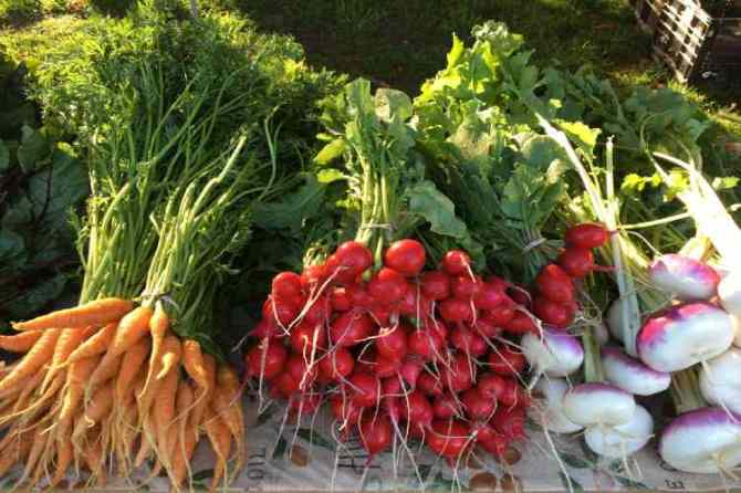 ooty, carrot, kumbakonam, hill station, vegetables, farmer, record, award, jaggery, adulteration, dubai, telanagana, prince, startup, entrepreneur, suggestions, ideas, company registration