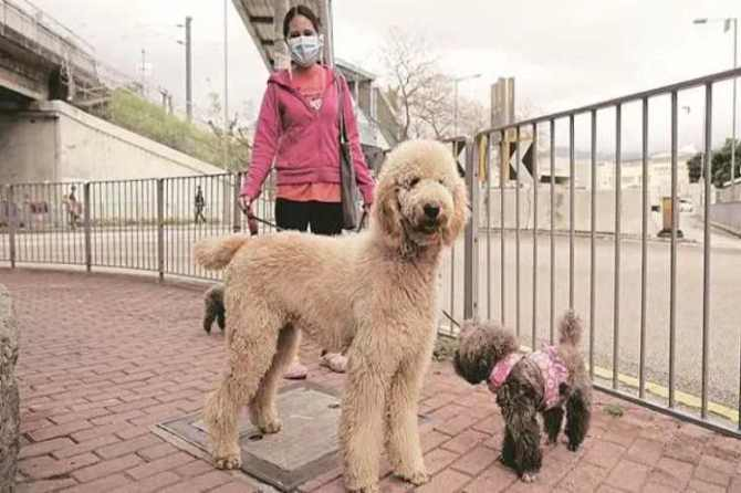 coronavirus, coronavirus in india, coronavirus in dogs, pet animals, dogs, cats, coronavirus infection, covid-19, express explained, indian express