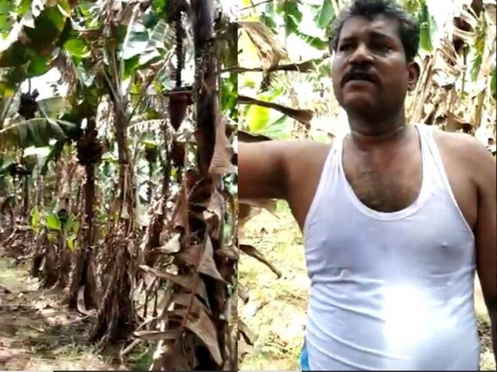 Covid 19 plantain cultivator talks about his loss during lockdown viral video