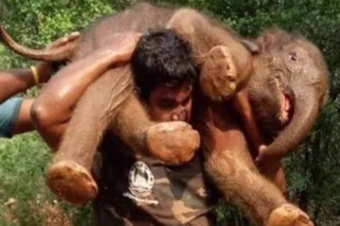 elephant rescue,forest guard carries elephant calf, tamil nadu, coimbatore, mettupalayam, forest guard, trending, netizens, twitter,news in tamil, tamil news, news tamil, todays news in tamil, today tamil news, today news in tamil, today news tamil