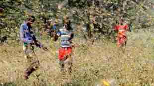 locust in tamil nadu, tamil nadu govt issues advisory to farmers on grosshoppers, தமிழகத்திற்கு வருமா வெட்டுக்கிளிகள், வெட்டுக்கிளிகள், ராஜஸ்தான், மத்தியப்பிரதேச, வெட்ட்டுக்கிளிகள் தாக்குதல், locust attack in Rajasthan, locust attack Madhya Pradesh tamil nadu govt issues advisory to farmers on locust, grosshoppers attacks, latest tamil nadu news, latest tamil news, latest news in tamil