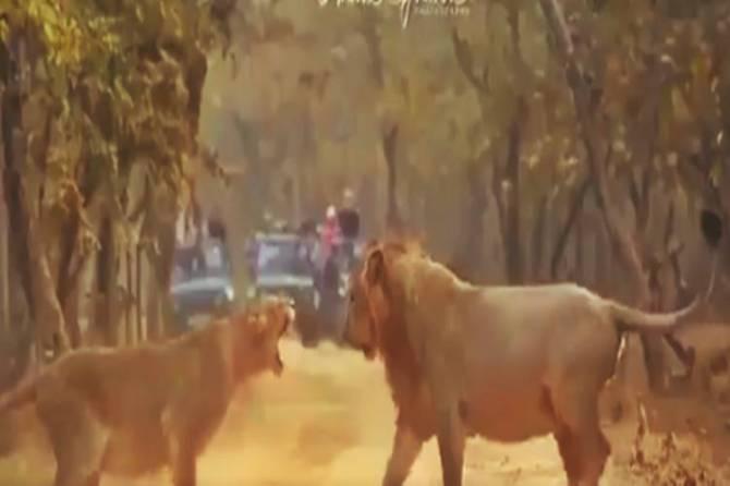 tamil viral video, animals fight viral video, social media viral, வைரல் வீடியோ, வைரல் செய்திகள, social media viral, latest tamil viral