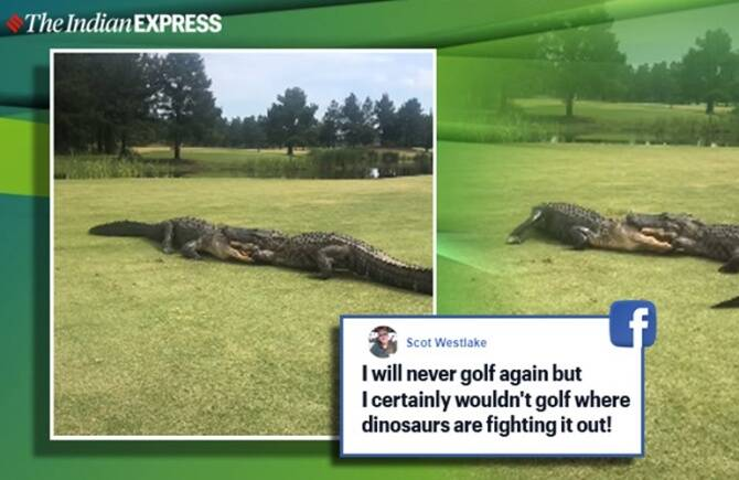 Trending viral video of two alligators engage in intense fight at US golf course