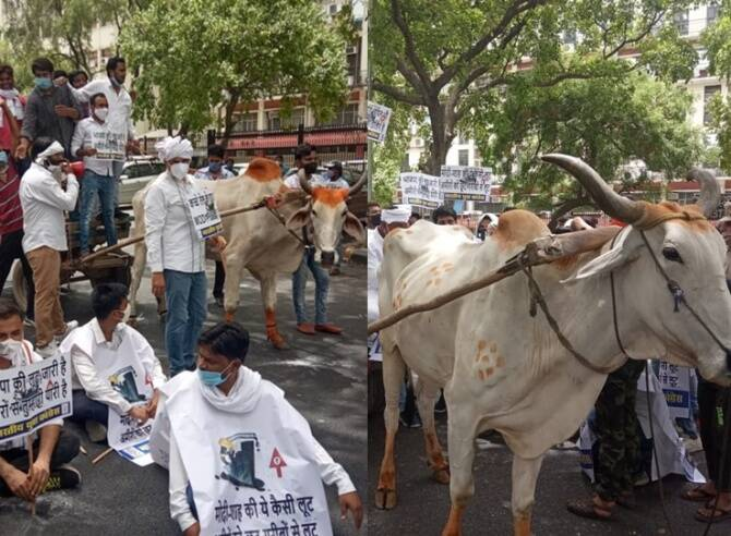 Youth Congress Stag protest against petroleum price hike at front of Shashtri Bhavan