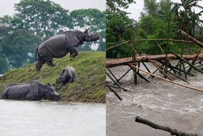 Assam Flood 2020 23 out of 33 districts inundated with floodwater