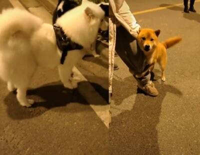 Trending viral video of a brave dog takes on his enemies