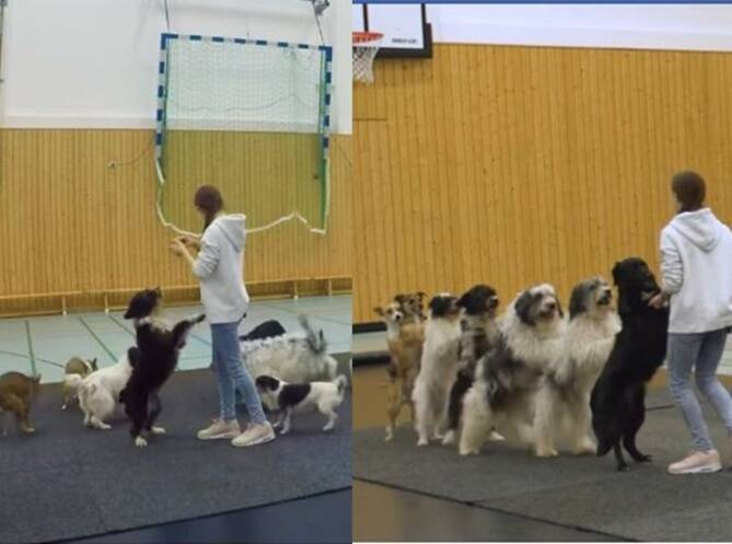 Viral Video of 8 Dogs Come Together To Set A World Record For Conga