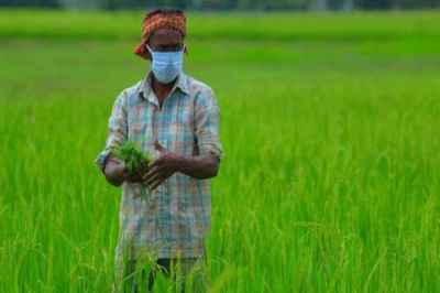 Agriculture, farmers, Indian government,indian agriculture, agricultural reforms, farmers, farmers in india, farmers'produce, agricultural ordinances, punjab mandi model, indian express news