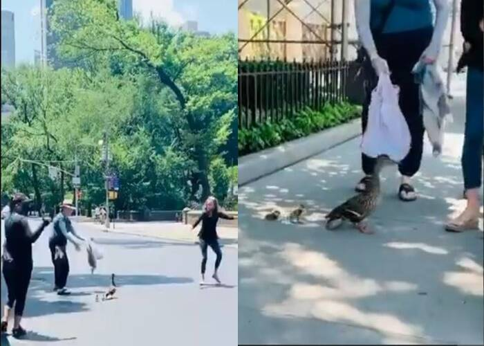 Congresswoman stops New York traffic to help ducks cross road, wins praise online