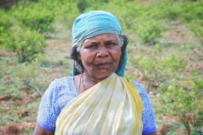 Coronavirus lockdown public transportation restrictions impacted daily life of Irular tribes in Coimbatore
