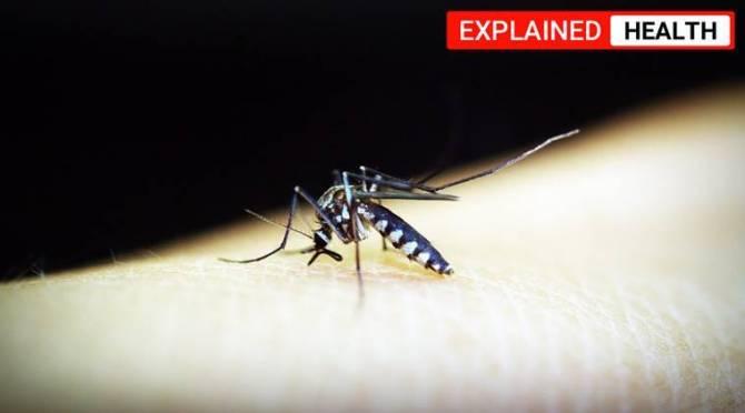 coronavirus, can mosquitoes spread coronavirus, How we know mosquitoes cannot spread coronavirus, கொரோனா வைரஸ், கொசுக்கல் கொரோனாவை பரப்ப முடியாது, can mosquitoes cause coronavirus, mosquitoes spread coronavirus,கன்ஸாஸ் மாநில பல்கலைக்கழகம், mosquitoes and coronavirus, can mosquitoes transmit coronavirus, Kansas State University scientists study