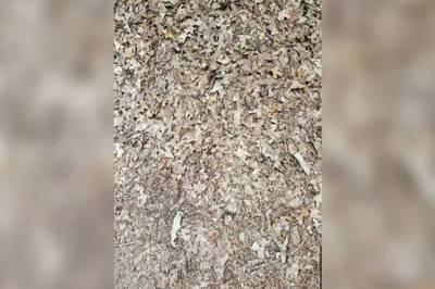 இங்கே ஒளிந்திருக்கும் பாம்பை 15 நொடிகளில் உங்களால் கண்டுபிடிக்க முடியுமா?