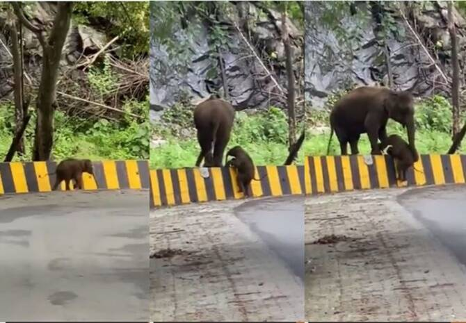 Trending viral video of elephant In Kerala uses trunk to help calf over barrier