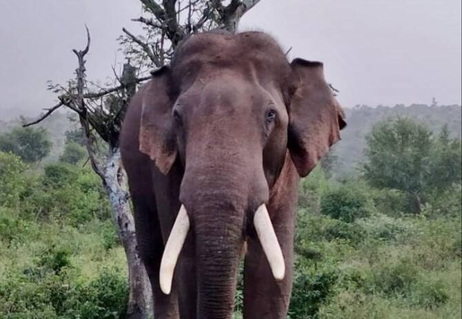 Mystery surrounds death of 32 years-old elephant relocated from Hosur after killing 3 people