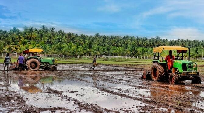 Delta Districts cultivate kuruvai crops in 3.87 lakhs acre this year