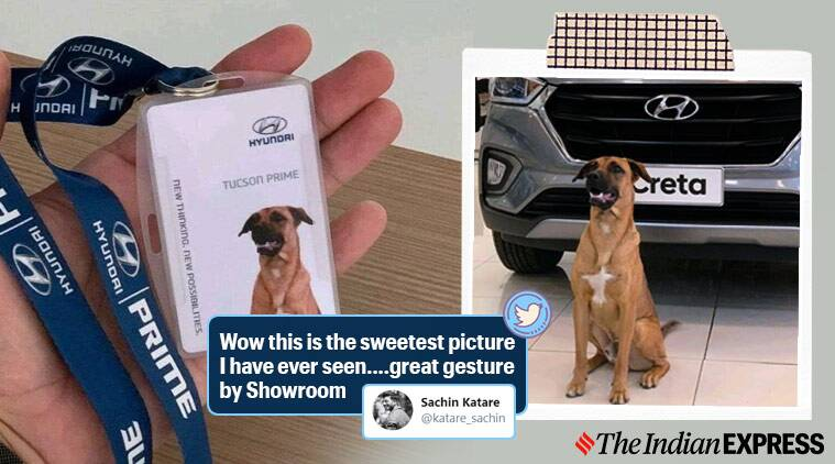 Car showroom adopts local stray dog and make him 'sales consultant'
