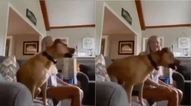 Trending viral video of dog watching the match on TV