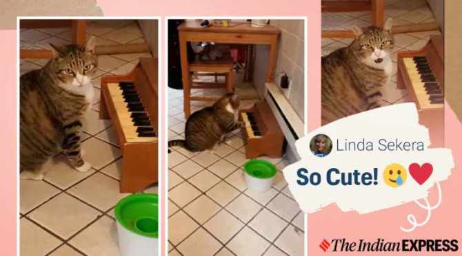cat plays piano, cat piano for food, cat plays piano when hungry, winslow the cat, viral videos, cute cat videos, viral animal videos, indian express