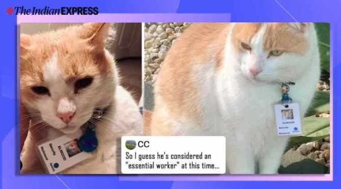 Australia, cat, security officer, hospital hires cat as security officer, australia hospital hires cat as security guard, epworth hospital, cute cat, viral cats, trending, indian express, indian express news