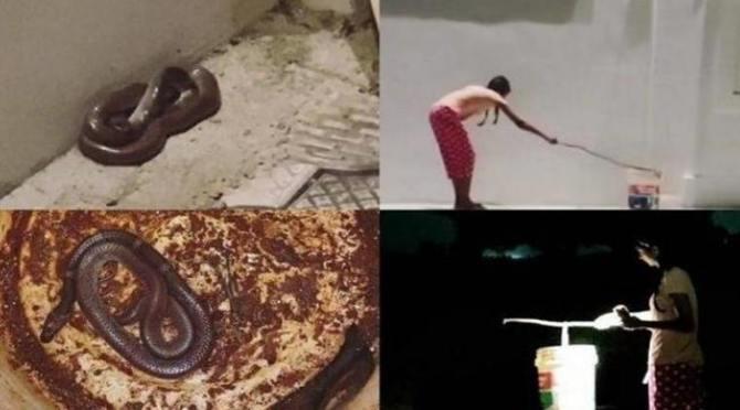 Keerthi Pandian Catching Snake