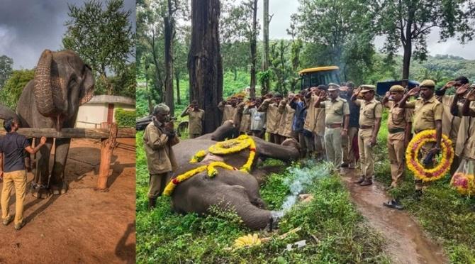 Asia's tallest female elephant Kalpana passed away in Coimbatore