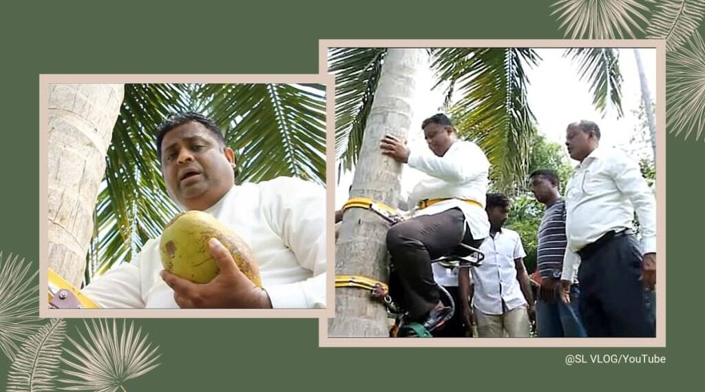 Arundika Fernando, climbed a coconut tree in his coconut estate in Dankotuwa for the press conference while holding the fruit.