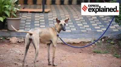 PM Modi, Mann ki baat, Indian dogs, indian dog breeds, indian dog breeds you must know about, PM Modi Mann ki baat dogs, Combai, Chippiparai, Rajapalayam, Mudhol Hound, express explained indian express