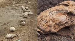 Dinosaur Eggs verified as ammonite sediments