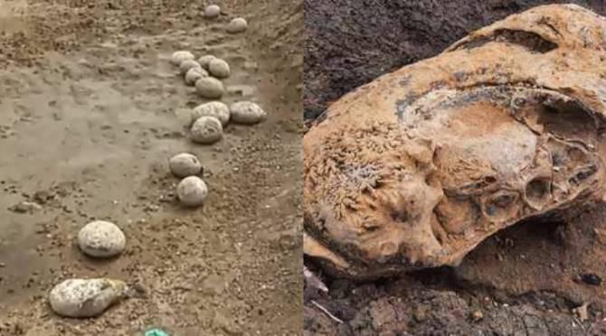 Dinosaur Eggs verified as ammonite sediments