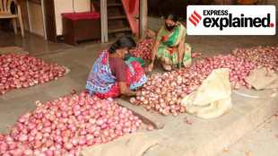 Onion prices, onions, onion prices india, onion prices explained, வெங்காயம், வெங்காயம் வணிகம், onion trade, Onion prices high, vegetable prices, வெங்காயம் விலை உயர்வு, வெங்காயம் விலை உயர்வைக் கட்டுப்படுத்த மத்திய அரசு நடவடிக்கை, high vegetable prices, tamil indian express, central govt moves to contro Onion prices