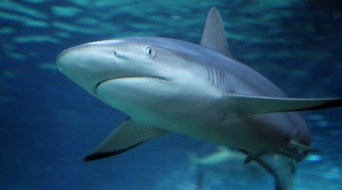Half a million sharks may be killed to make Covid-19 vaccine say experts
