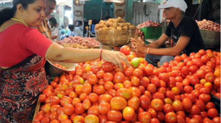 tomato tamil tomato vegetable tamil
