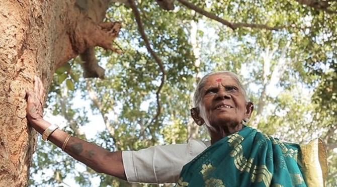 Environmentalist Saalumarada Thimmakka awarded honorary doctorate by central university of Karnataka