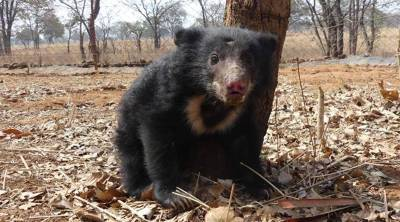 Bear in well viral video nellai district