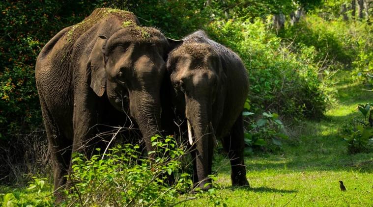 Why Masinagudi elephant corridor of Tamil Nadu has so many disputes?
