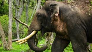 Masinagudi elephant corridor issue : People can send their grievances till Feb 2021