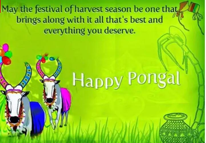 Harvest Festival Greetings