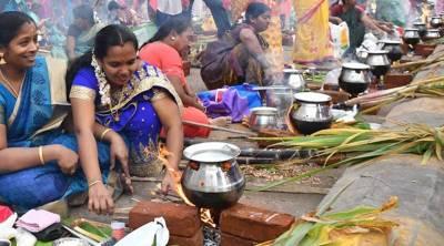 Maatu Pongal Kanum Pongal Boghi 2021 Significance Dates Time Tamil News