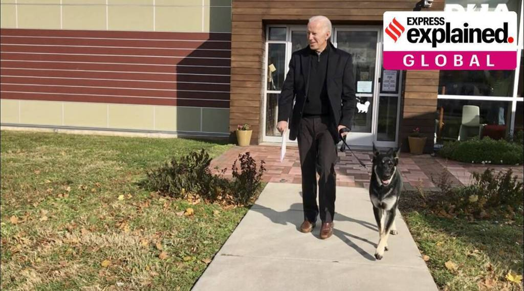 Joe Bidens first dogs move into white house Tamil News