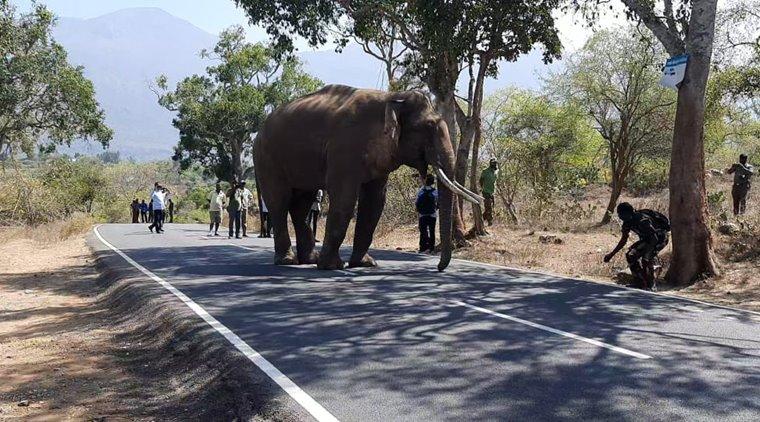 Elephants death in Tamil Nadu for last 6 years