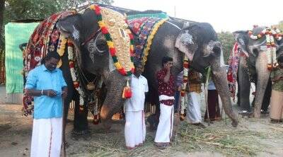 48-day retreat for temple elephants kicks off near Mettupalayam