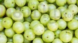 Healthy food news in tamil how to consume amla and health benefits of Amla