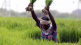 Behind reduction in agriculture budget lower spending under pm kisan Tamil News