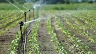 Lifestyle news in tamil home garden and terrace garden tamilnadu govt scheme