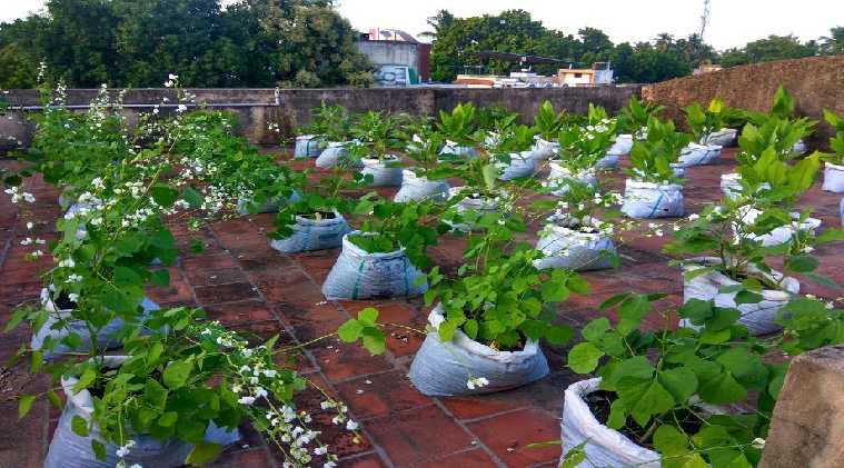 Lifestyle news in tamil terrace garden diy kit tamilnadu govt scheme