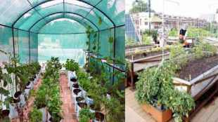 Lifestyle news in tamil easy way to set a terrace garden