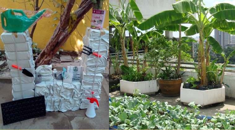 Lifesyle news in tamil rs.510 tamilnadu govt terrace garden kit and more benafits