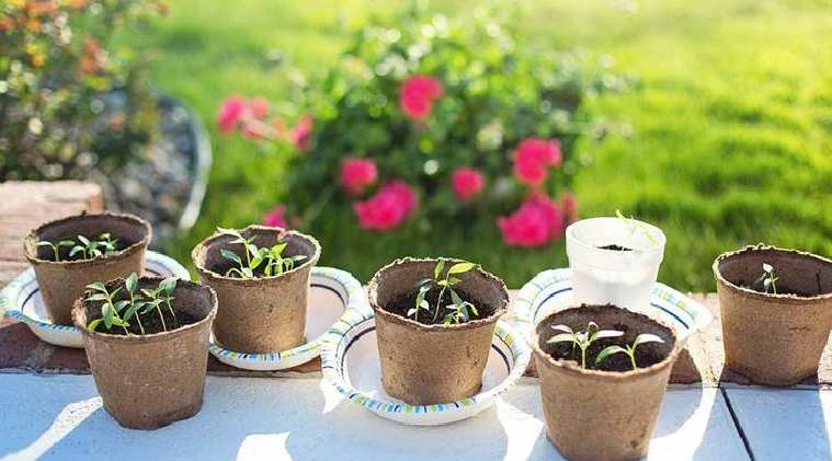 Healthy Food News in tamil Benefits of mustard seeds and how to grow it at home