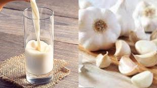 garlic milk benefits, how to make garlic milk, garlic milk for weight loss, garlic milk recipe, பூண்டு பால், பூண்டு பால் நன்மைகள், பூண்டு பால் செய்வது எப்படி, பூண்டு பாலின் நன்மைகள், garlic milk benefits tamil, garlic milk side effects, garlic milk recipe, garlic milk for breastfeeding, garlic milk for weight loss, தாய்ப்பால் சுரப்பதற்கு பூண்டு பால், garlic milk turmeric benefits, பூண்டு பாலின் குணங்கள், garlic milk for gas, garlic milk ayurveda
